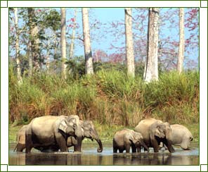 Assam Wildlife Sanctuaries