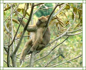 Gibbon Wildlife Sanctuary