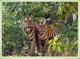Bhimbandh Wildlife Sanctuary