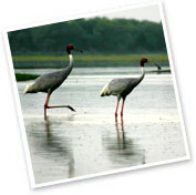 Bharatpur Bird Sanctuary, Rajasthan