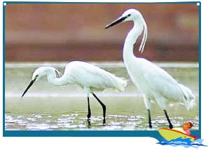 Dr. Salim Ali Bird Sanctuary Goa