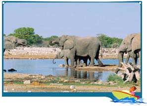 Wildlife Sanctuaries in Goa