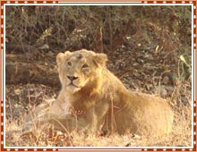 Gir National Park Gujarat