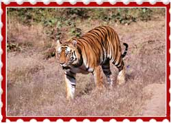 Muthodi Wildlife Sanctuary