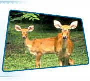 wildlife in kashmir