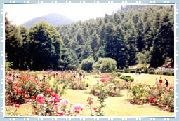 Kokernag Travel
