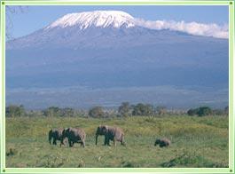 http://www.bharatonline.com/kerala/gifs/silent-valley-national-park-palakkad.jpg