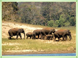 Idukki Wildlife Sanctuary Kerala