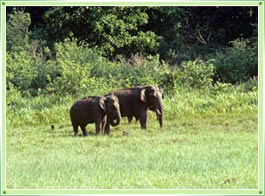 Peppara Wildlife Sanctuary Trivandrum