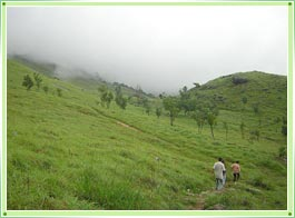 Ponmudi Hill Station Trivandrum
