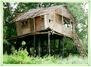 Tree House in Kerala