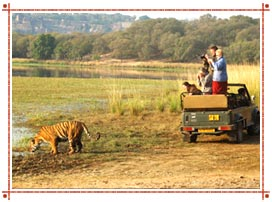 Jeep Safaris in Rajasthan