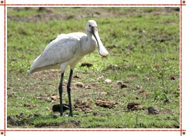 Things To Do In Bharatpur