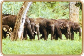Anamalai Wildlife Sanctuary Coimbatore