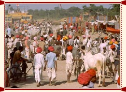 Cattle Fair Bateswar Uttar Pradesh