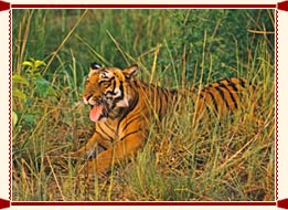 Wildlife in Uttar Pradesh