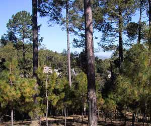 Hill Station, Ranikhet