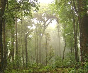 park heritage kalimpong