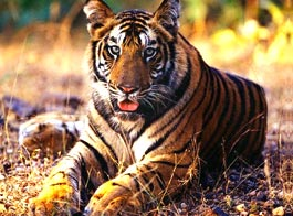 Sunderban National Park