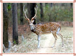 Wild Life in Rajasthan